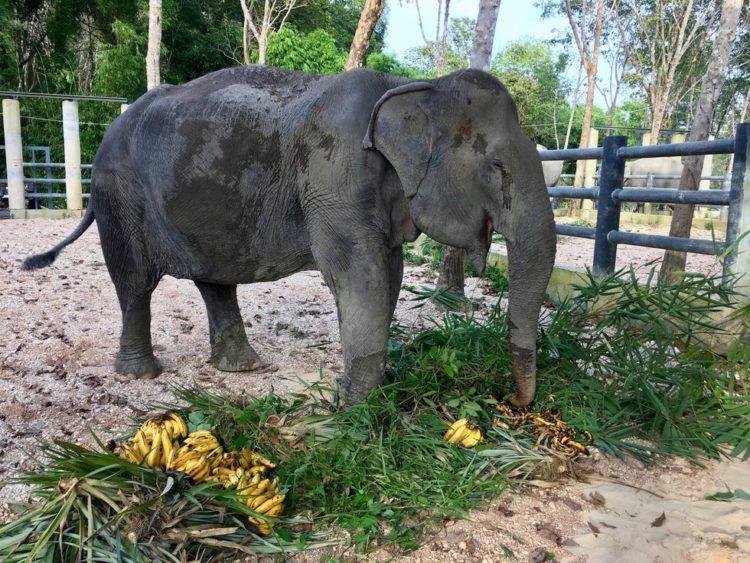 elefante-ciega-11