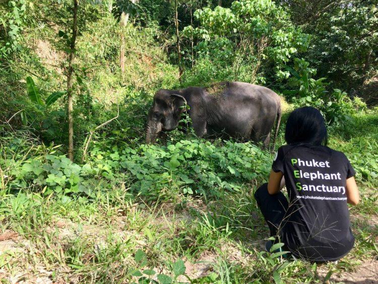 elefante-ciega-12
