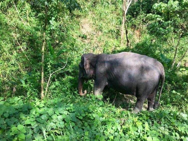 elefante-ciega-13