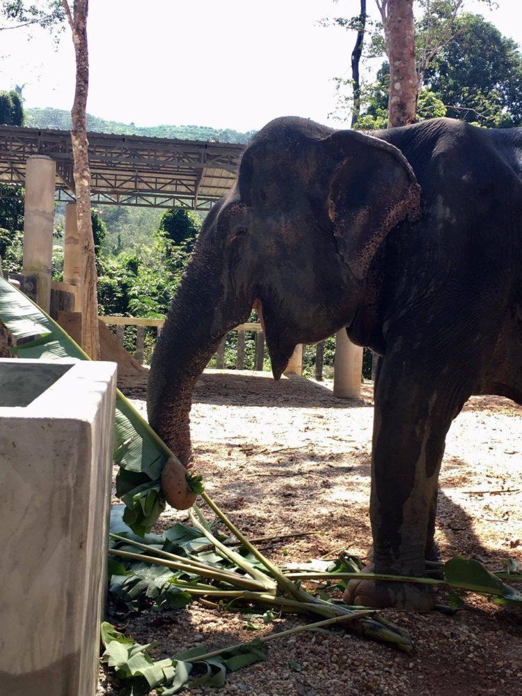 elefante-ciega-14