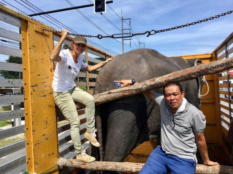 elefante-ciega-2