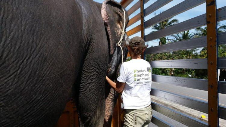 elefante-ciega-3