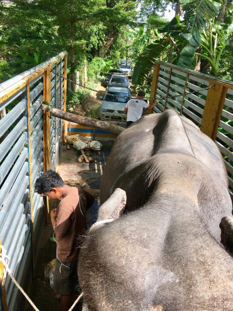elefante-ciega-4