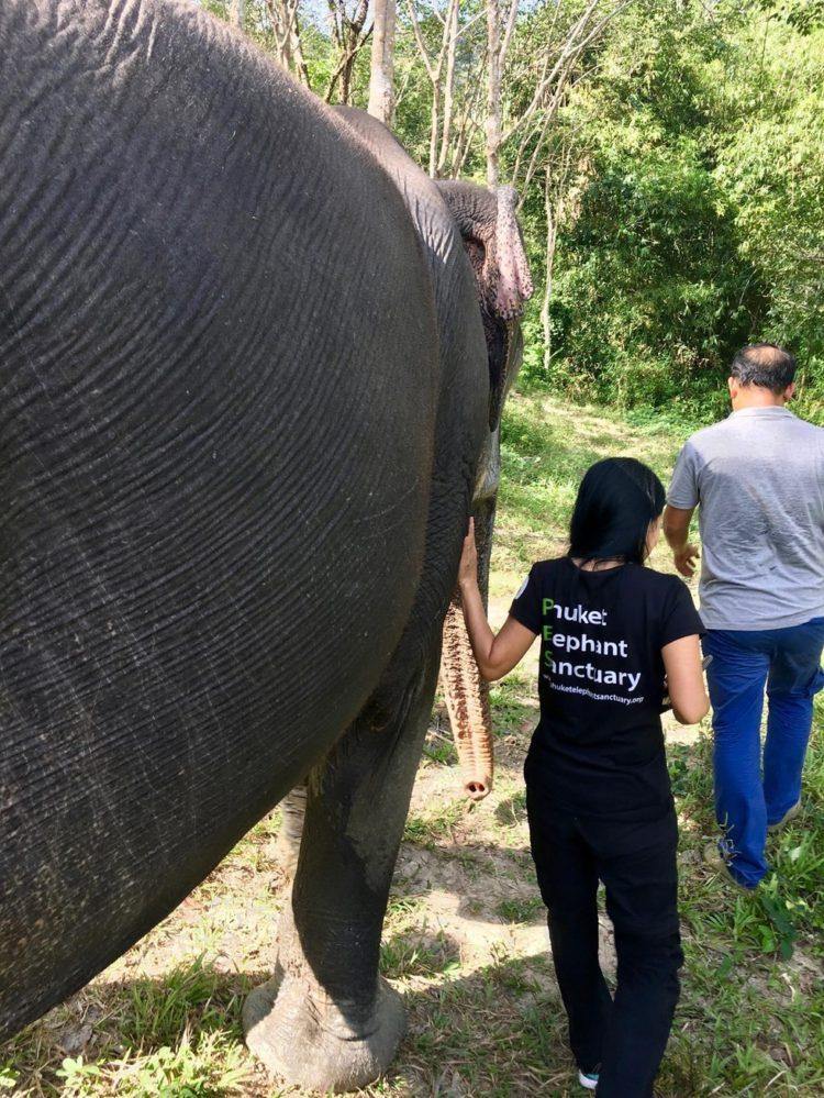elefante-ciega-6