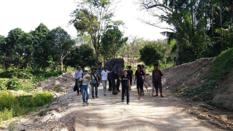 elefante-ciega-7