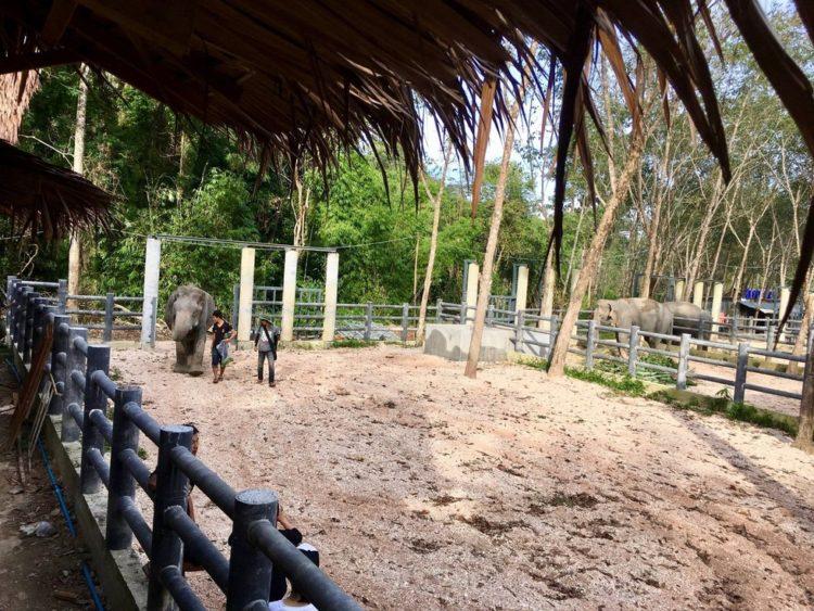 elefante-ciega-9