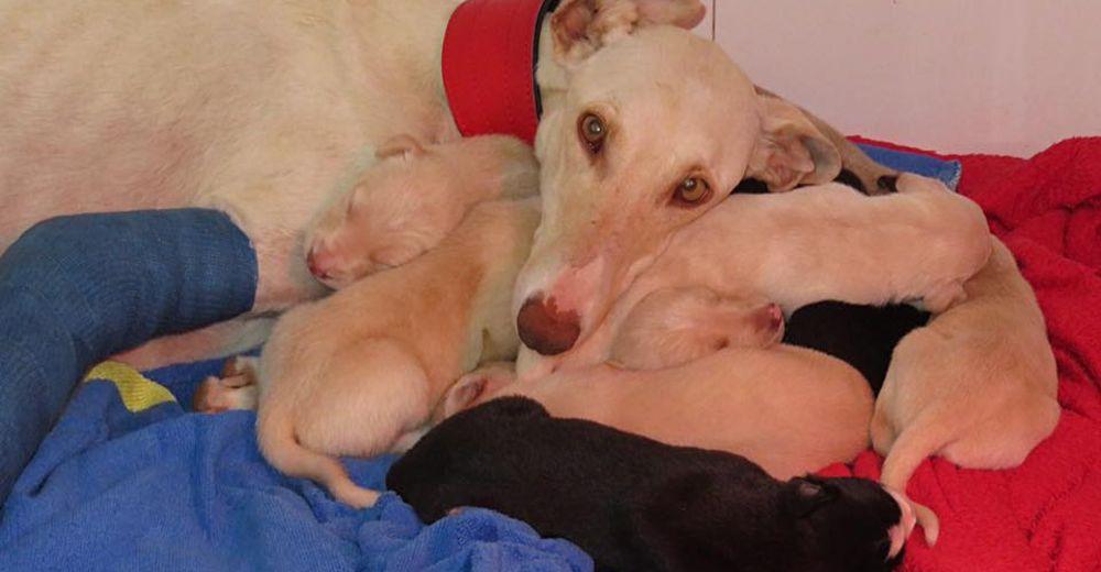 Cuando Vera fue rescatada regresó a la calle con sus héroes para buscar a sus cachorritos