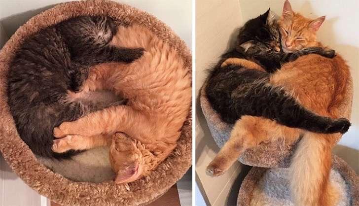 mascotas-crecimiento-antes-y-despues1
