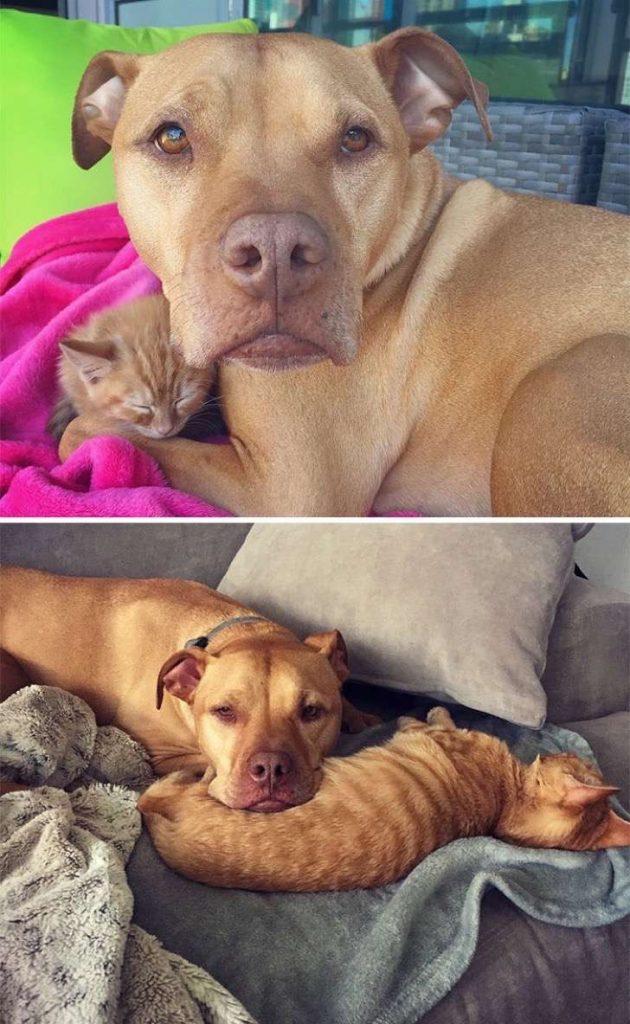 mascotas-crecimiento-antes-y-despues10