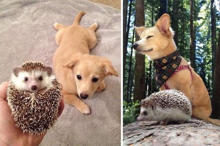 mascotas-crecimiento-antes-y-despues13