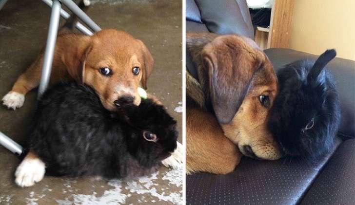 mascotas-crecimiento-antes-y-despues2