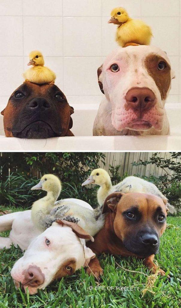 mascotas-crecimiento-antes-y-despues6