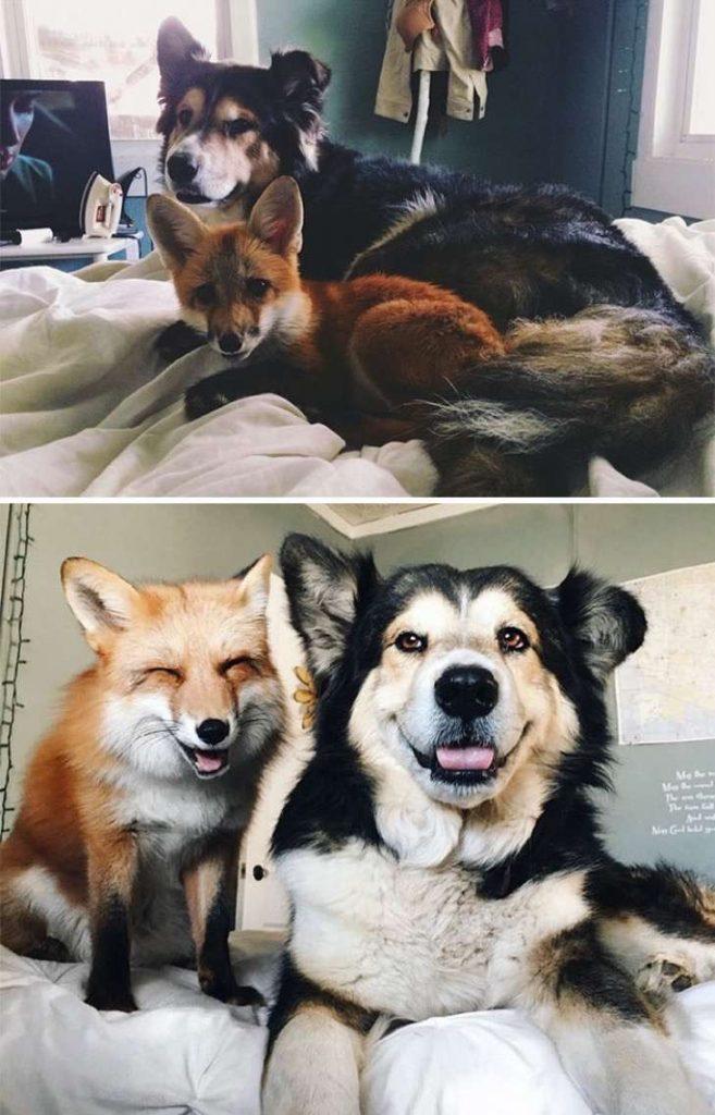 mascotas-crecimiento-antes-y-despues7