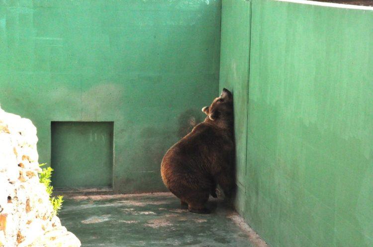 osos-1