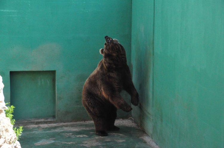 osos-3