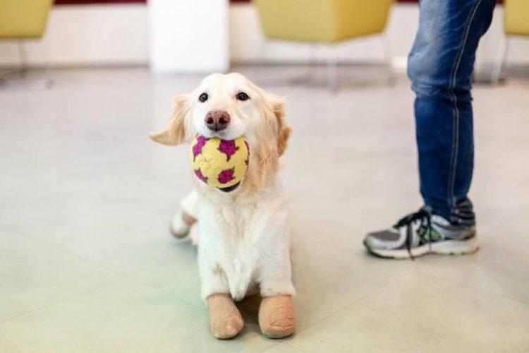 perro-perdio-patas2