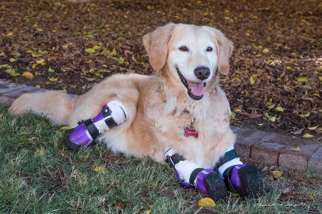 perro-perdio-patas6
