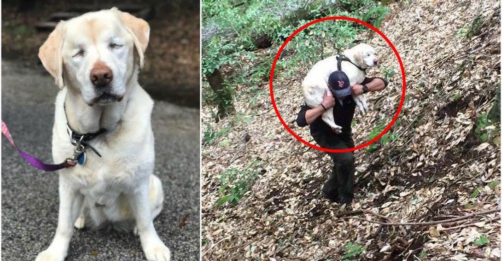 Se molesta por una bolsa que tiraron en el bosque, pero era la perrita ciega que todos buscaban