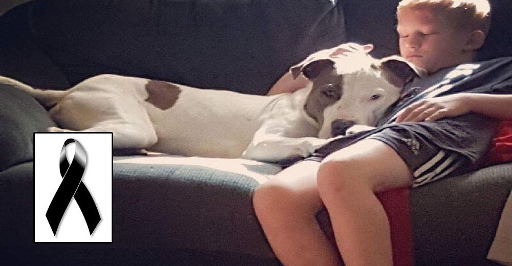 «Esta noche Dios tomó otro ángel» – La tragedia del niño de 10 años que murió junto a su perro