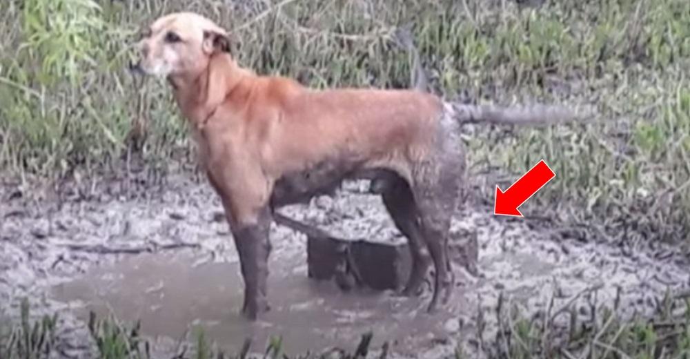 Policías siguen el llanto imparable de un perrito, hasta que descubren la maldad de su dueño
