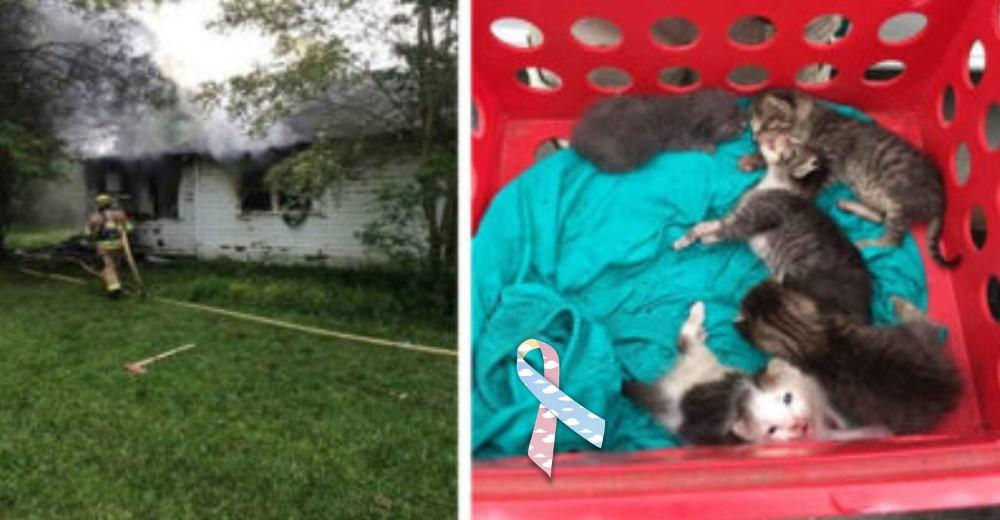 Rescatados por los bomberos acaban con su vida en el refugio –Los gatos sanos que merecían vivir