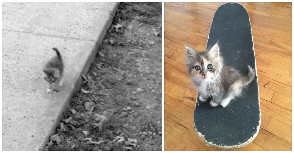 Esta gatita se acerca a un joven en busca de comida sin imaginar que recibiría mucho más