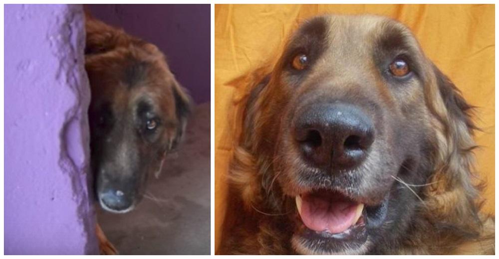 El perrito que estuvo encadenado 8 años, sonríe al ser acariciado por primera vez