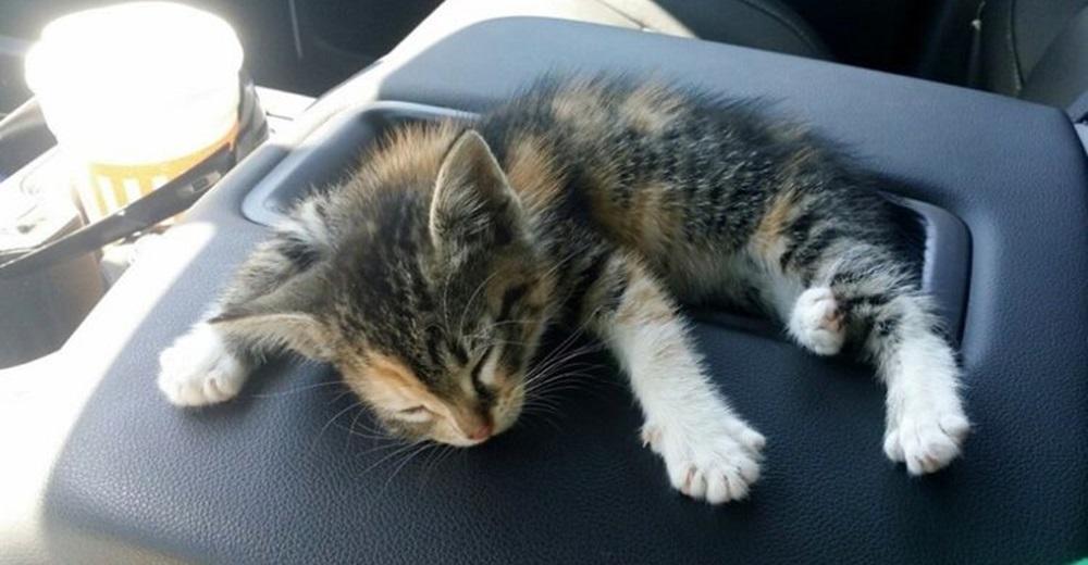 Un gatito bebé rescatado de una carretera deja en lágrimas a su nuevo dueño