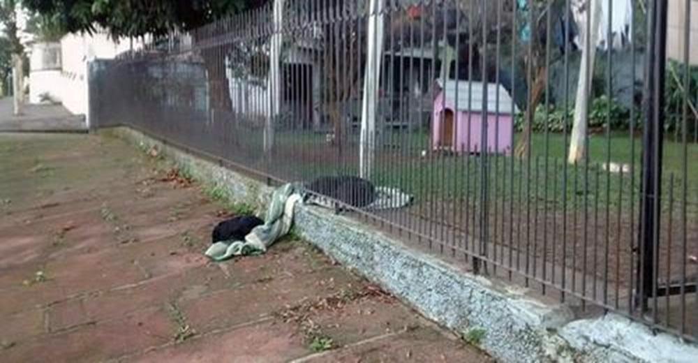 Perrita rescatada arrastra una mantita para compartirla con otro perrito que temblaba de frío