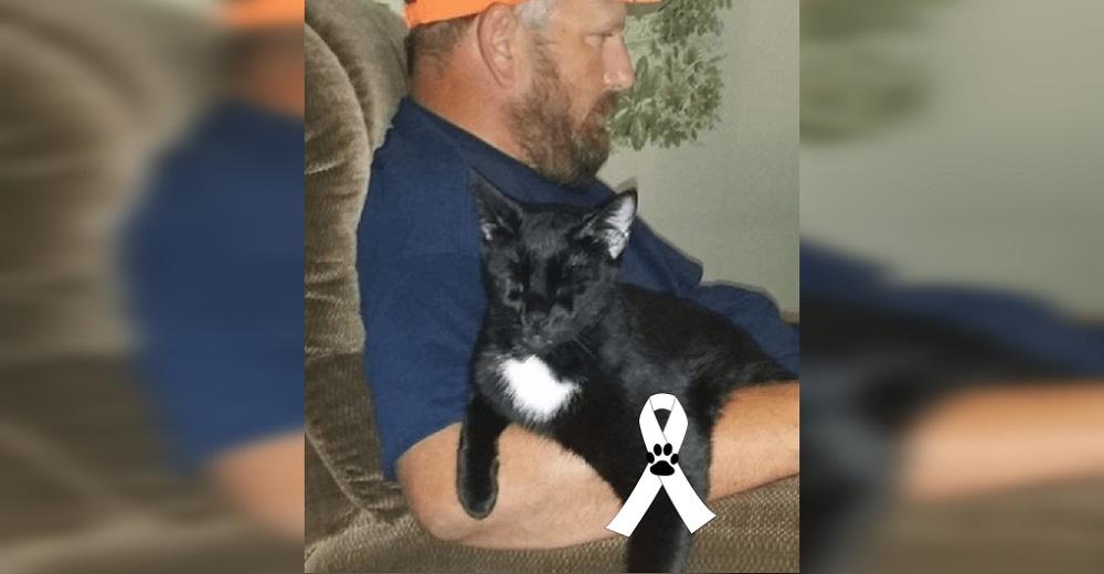 Advierte la tragedia mortal que sufrió su gato en su afán de ayudarlo con las temidas pulgas