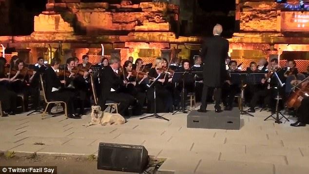 perro callejero concierto orquesta sinfonica intruso Festival International Izmir Fundacion cultura artes İKSEV Orchestra camara Viena Theater teatro efes