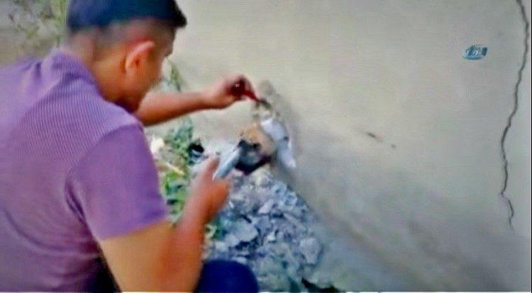 merin truquia perro atrapado tuberia pared cabeza rescate asombroso martillo destruir