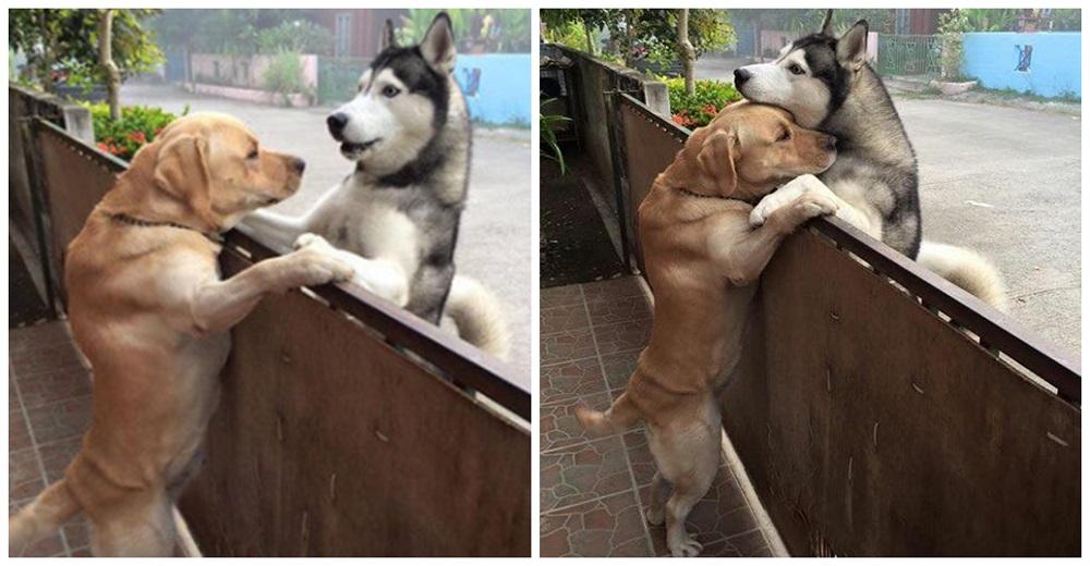 Aprovecha el mínimo descuido para escapar y le suplica ayuda a su mejor amigo