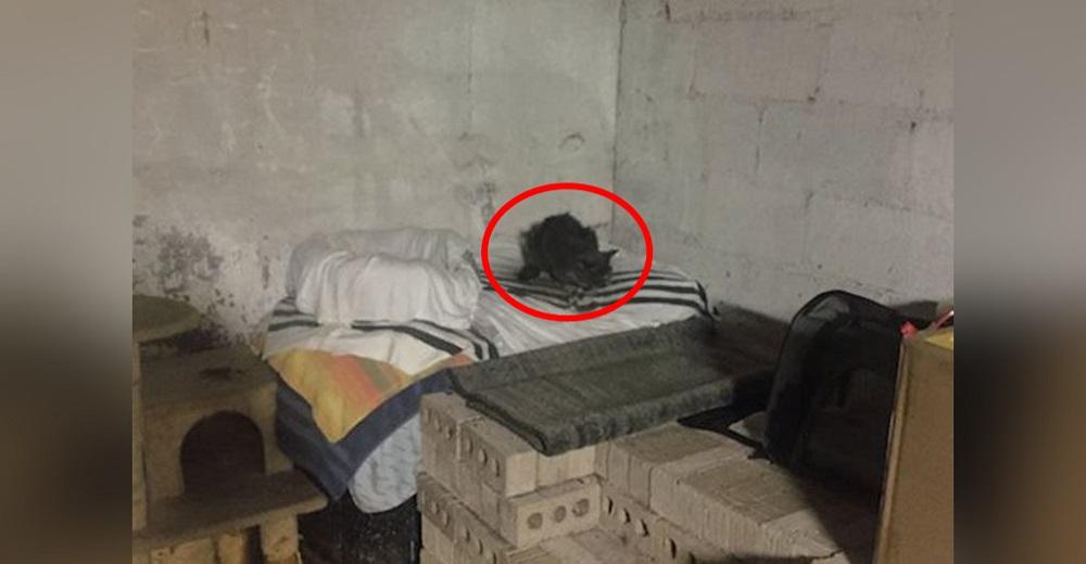 Baja al sótano de su nueva casa y descubre una gatita luchando por sobrevivir desde hace 20 años