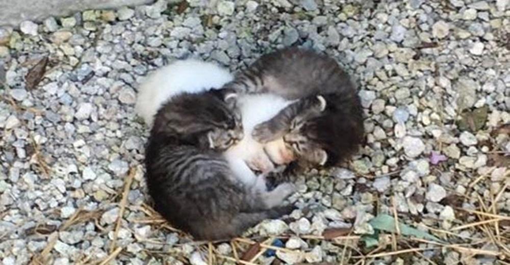 Dos hermanos gatitos abandonados se acurrucaban alrededor de su hermana para protegerla