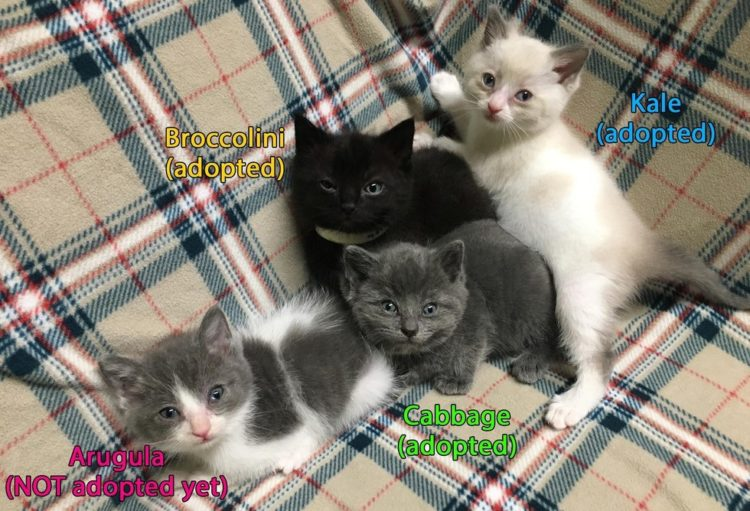 """<img src=""""http://www.zoorprendente.com/wp-content/uploads/2017/09/gatitos-rescatados-escalera-02-750x411.jpg"""" alt=""""gatitos rescatados debajo de una escalera Stephanie Babcock Veterinary care center LA animal rescue hope for paws rescued kittlens stair staircase under eye infection infeccion ocular nombre kale broccolinni arugula cabbage repollo rugula brocoli """" width=""""750"""" height=""""411"""" class=""""alignnone size-large wp-image-66728"""" />"""