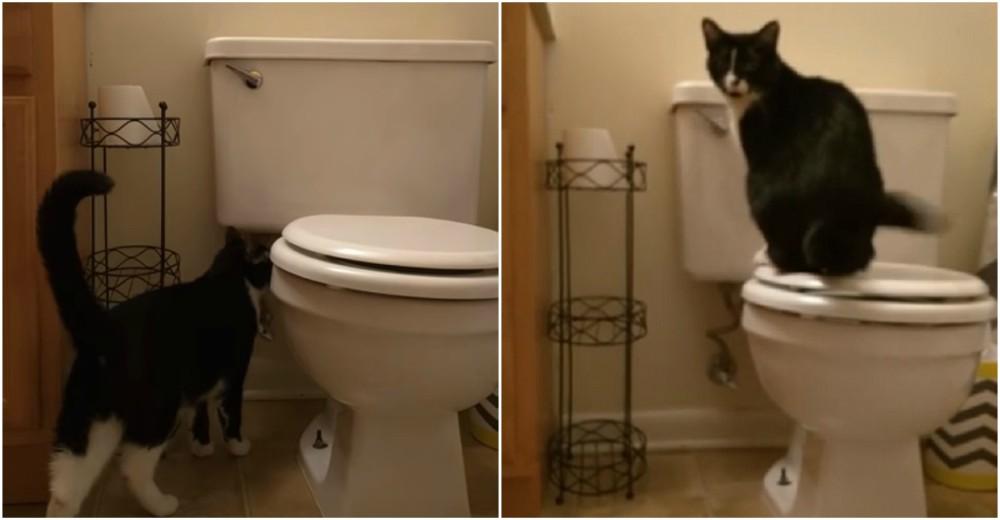 crazy eyes gato loco bota agua inodoro costosa factura de agua dueño descubre gastos hogar gato baja la poseta WC bota el agua
