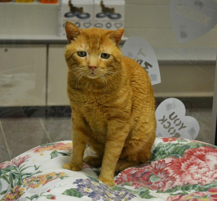 Lollypop Farm, the Humane Society of Greater Rochester nutmeg el gato mas triste del mundo saddest cat in the world encuentra hogar adoptado finds home sonrie smile