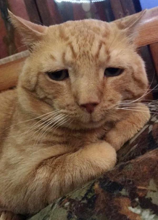 Lollypop Farm, the Humane Society of Greater Rochester nutmeg el gato mas triste del mundo saddest cat in the world encuentra hogar adoptado finds home sonrie smile