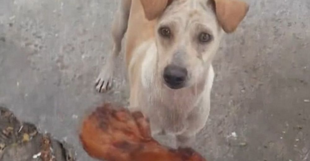 mama perra alimenta cachorros bangkok pide comida pollo persiguen encuentran hogar mom dog begs for food on the street to bring it to her pups puppies