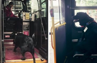 perrita eclipse viaja sola en el autobus para ir al parque Seattle eclipse eclipse dog takes rides on the bus alone seattle jeff young Mike Montgomery made the news