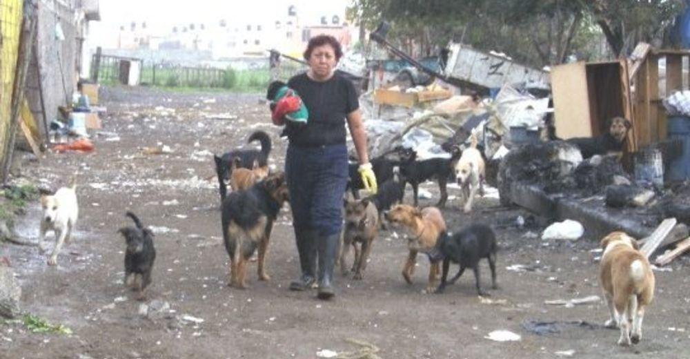 """Captan a una mujer que termina desolada al descubrir un """"vertedero de perros"""""""