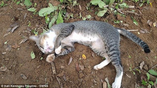 gato de luto pasa años viviendo en la tumba de su dueño Ibu Kundari Keli Keningau Prayitno java indonesia keli grieving cat refuses to leave dead owners grave