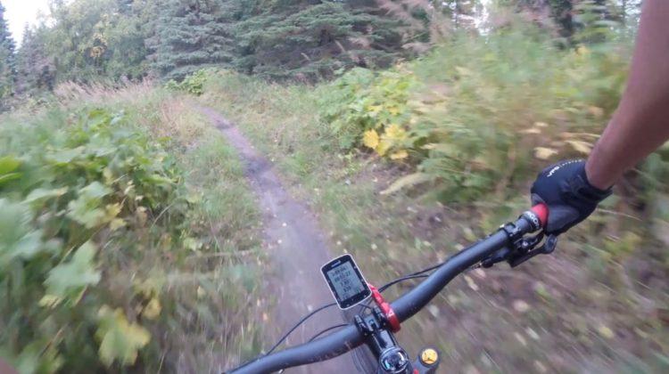 ciclista se encuentra con un oso negro en el medio del camino y de la sorpresa cae de bruces hacia unos arbustos sendero alaska Kincaid park cyclist faces bear road