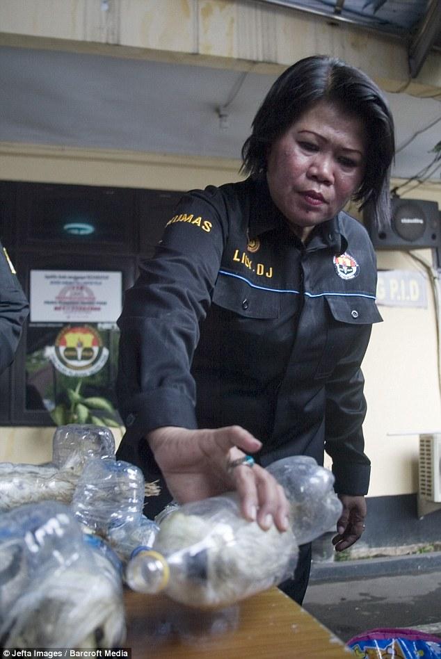 cacatuas rescatadas de botellas plasticas contrabando animales ilegal Indonesia cockatoos plastic bottles smuggled trafic illegal