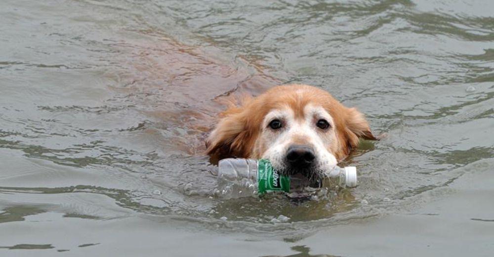 Un perrito golden ha pasado 10 años limpiando la basura que dejan los humanos en un río en China