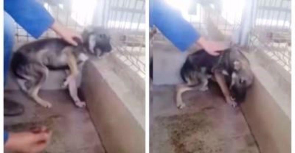 El «perrito que llora» no soportaba ser tocado por un humano, hasta que una mujer se acerca