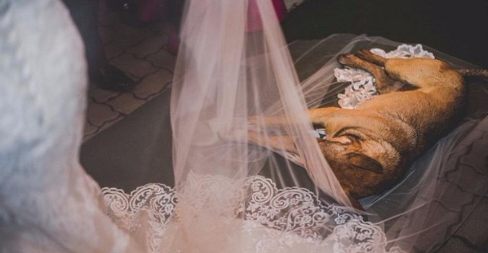 Perro callejero elige el vestido de una novia para reposar su patitas con lodo y ella reacciona