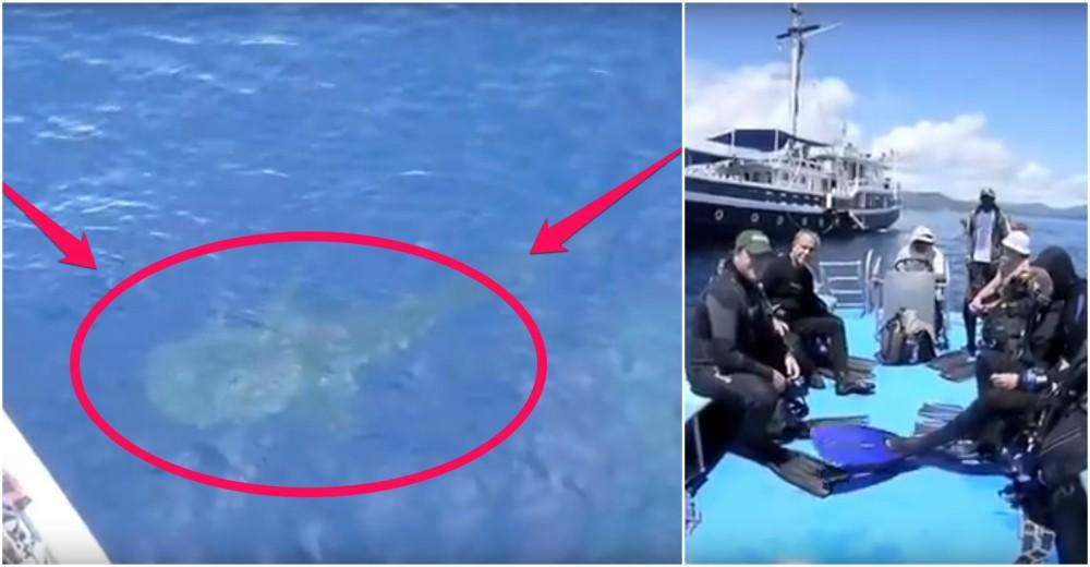 4 tiburón ballena rescatados de redes de pesca, bahía Cenderawasih, Indonesia whale sharks rescued divers fishing net boat