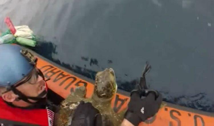 equipo antidrogas realizaba busqueda de rutina cuando encontraron dos tortugas marinas enredadas en redes afortunadamente logran rescatarlas coastguard sea turtles rescue tangled